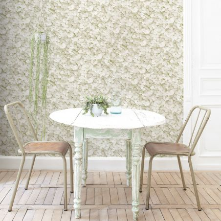Almond green hydrangea flowers Wallpaper