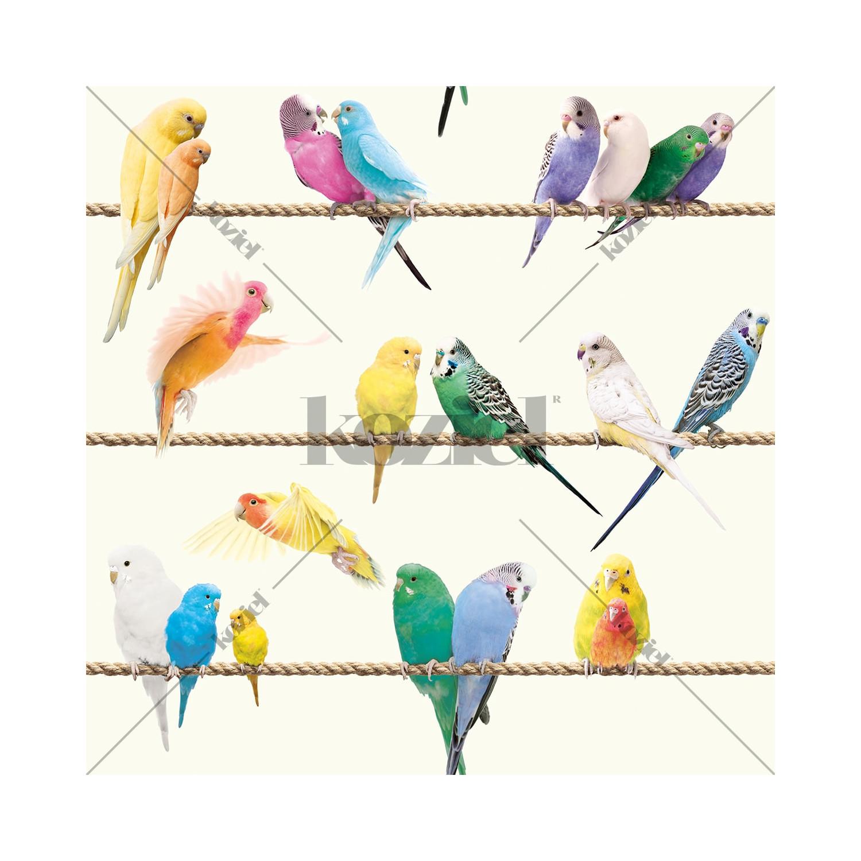 Sticker Oiseaux Sur Un Fil papier peint les inséparables sur fil - exotique