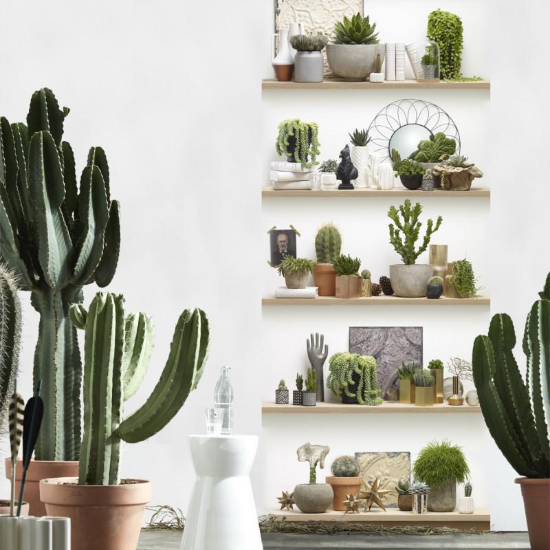 Papier Peint Trompe Loeil Etagères De Cactus