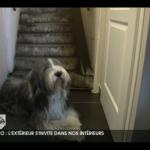 """Imposture """"Escalier de Métro"""" immédiatement adoptée par Oscar, le chien de la maison!"""