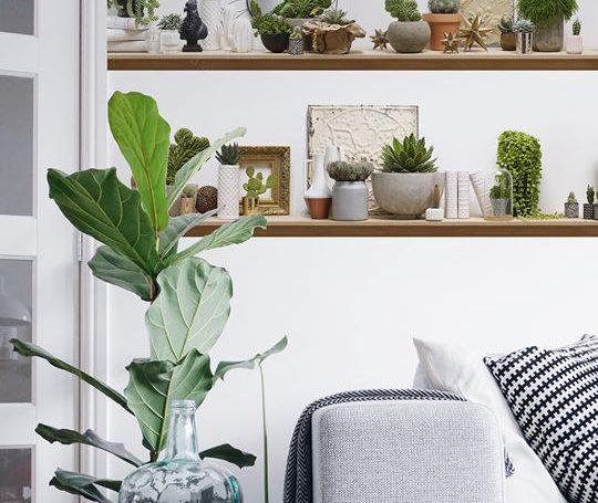 Des Vraies étagères Stylisées Avec Des Vrais Cactus Koziel Le Blog